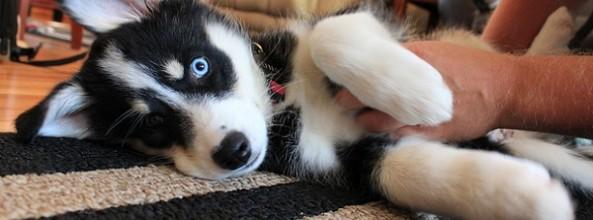 Necesidades afectivas caninas