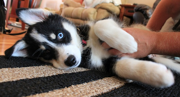 Las necesidades afectivas de un perro