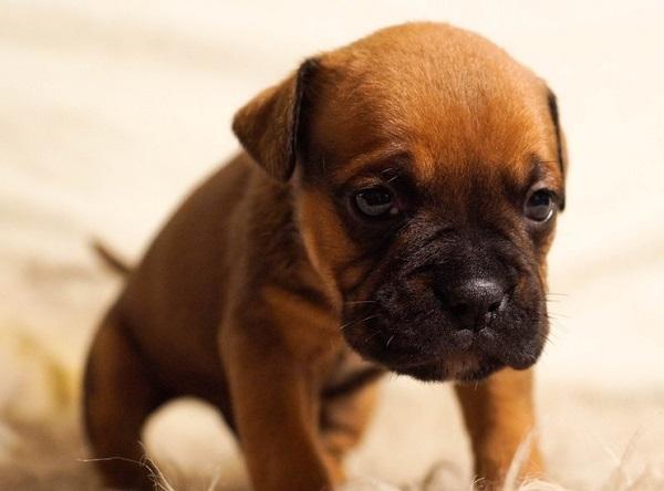 test para evaluar el carácter de un cachorro