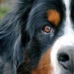 Lo que fueron las razas de perro y lo que son ahora