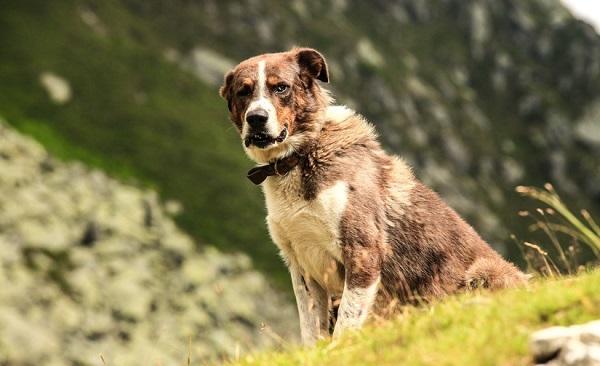 Cómo comportarse ante un perro desconocido