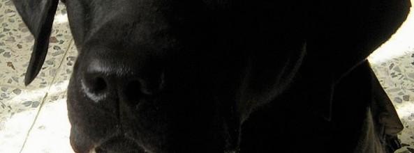 El escándalo de los ficticios perros guía estadounidenses
