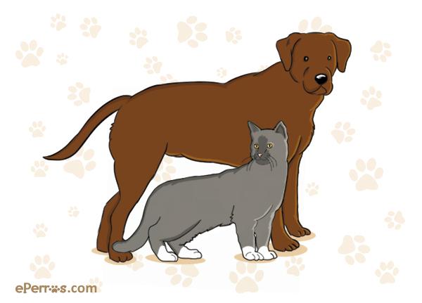 ¿Gatos o perros? Sexto festival de Splatoon