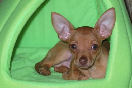 """The dogist"" el libro de perros que ha revolucionado internet"