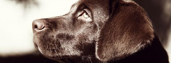 Entrenan a perros para proteger a mujeres