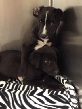 perros encontrados en pecera