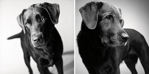 perros fotografiados
