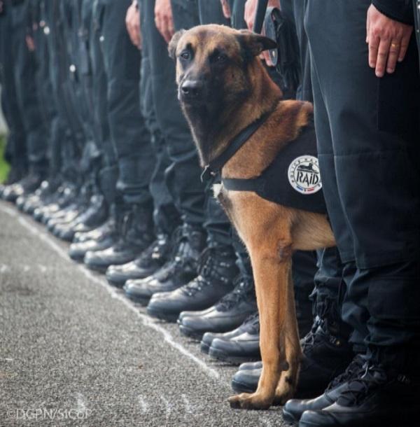 Diesel, la perra policía francesa