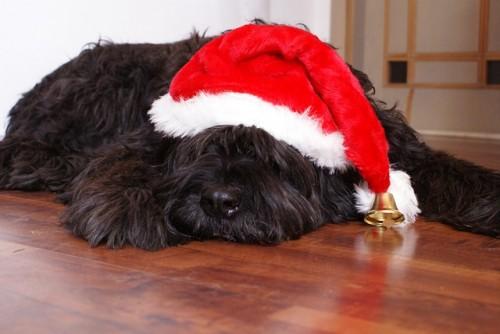 Regalos de Navidad para perros ¡tendencias!