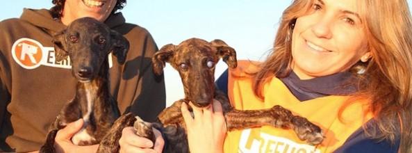 Cachorro de galgo protege y guía a su hermana ciega durante su abandono