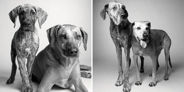 perros mayores y jóvenes