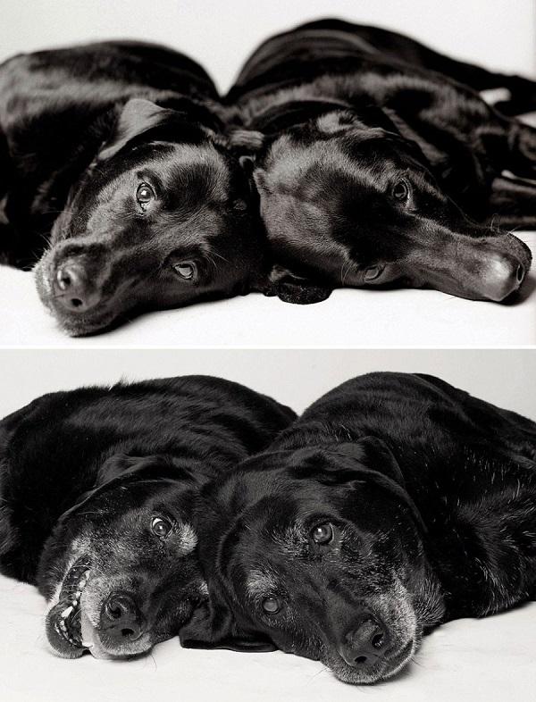 perros antes y despues