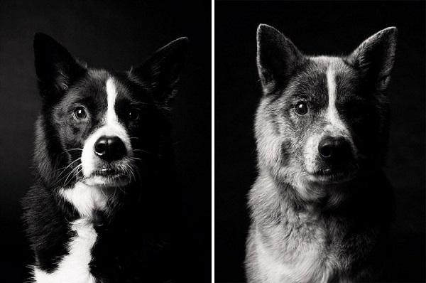 fotos de la edad de los perros