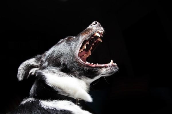 Las 10 situaciones que más estresan a tu perro