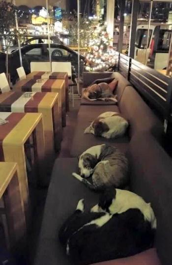 cafería perros callejeros pasen la noche