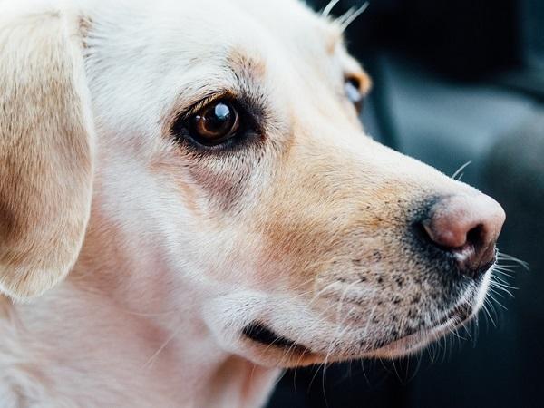 ¿Qué hacer si tu perro se pierde?