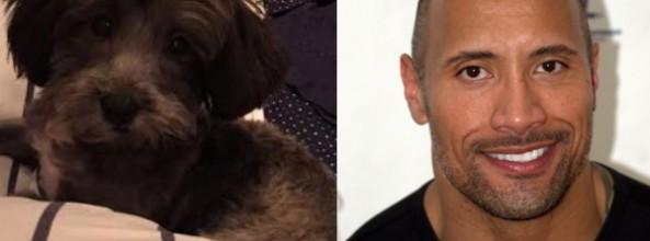 El actor Dwayne Johnson ayuda a salvar a un perro abandonado bautizado con su nombre