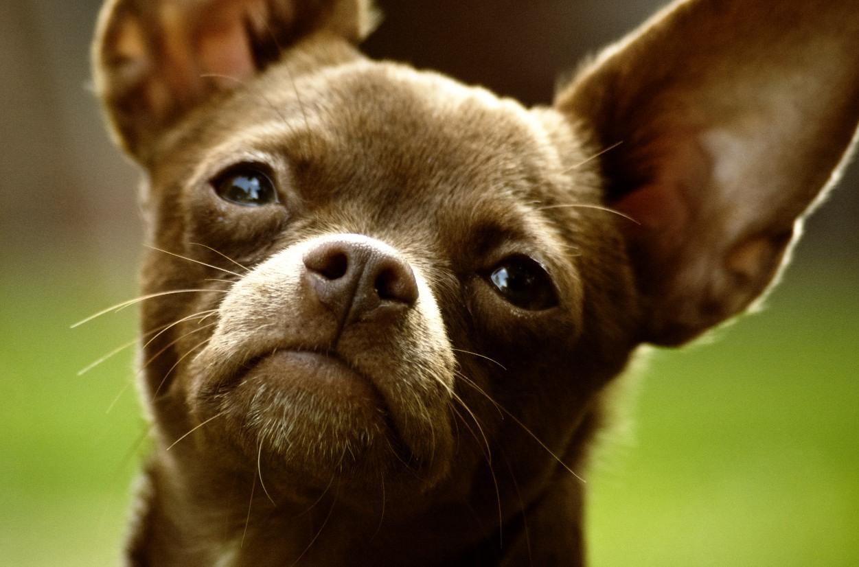 Noticias perros Málaga