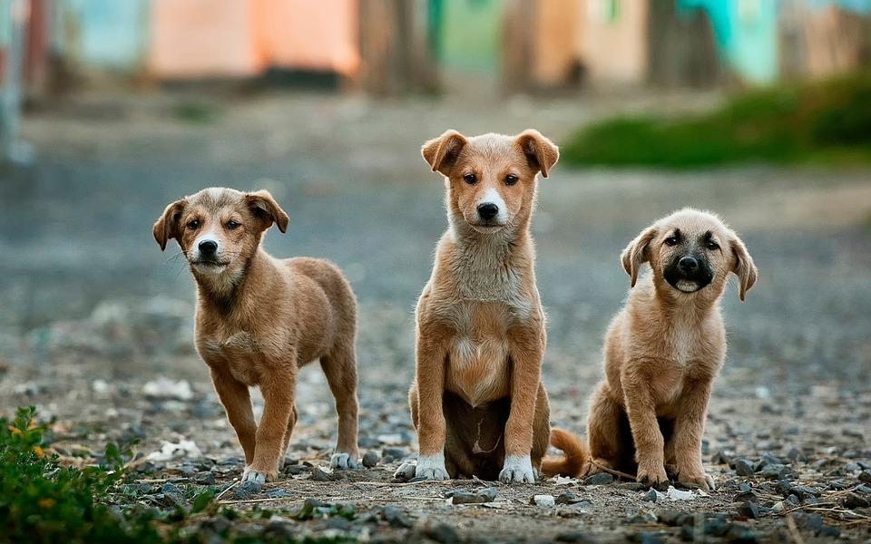 Noticias perros
