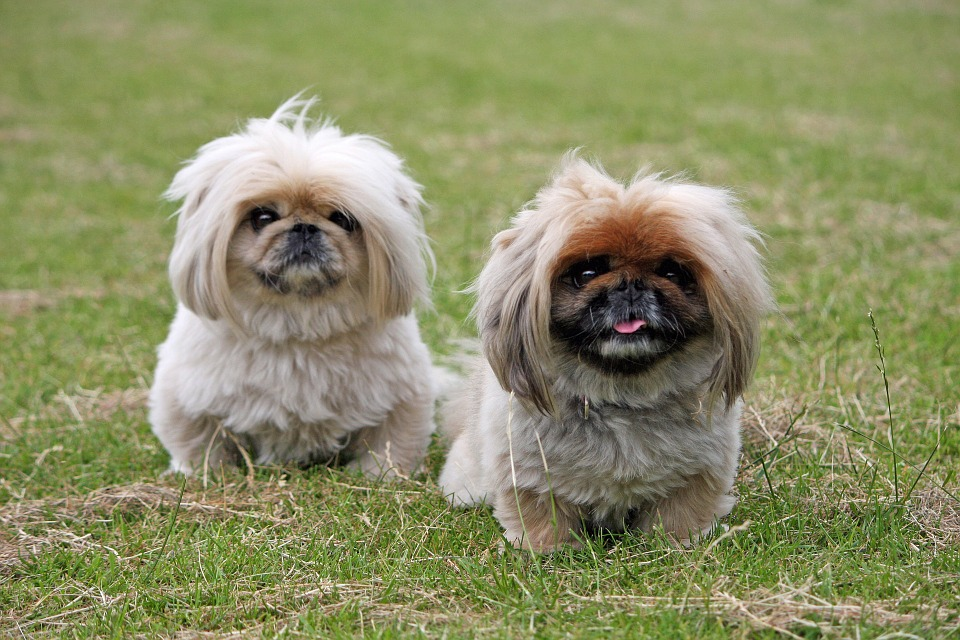 Los perros reconocen tus sentimientos: psicología canina