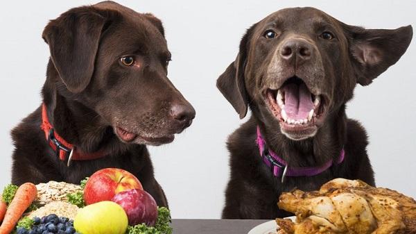 dietas veganas para perros