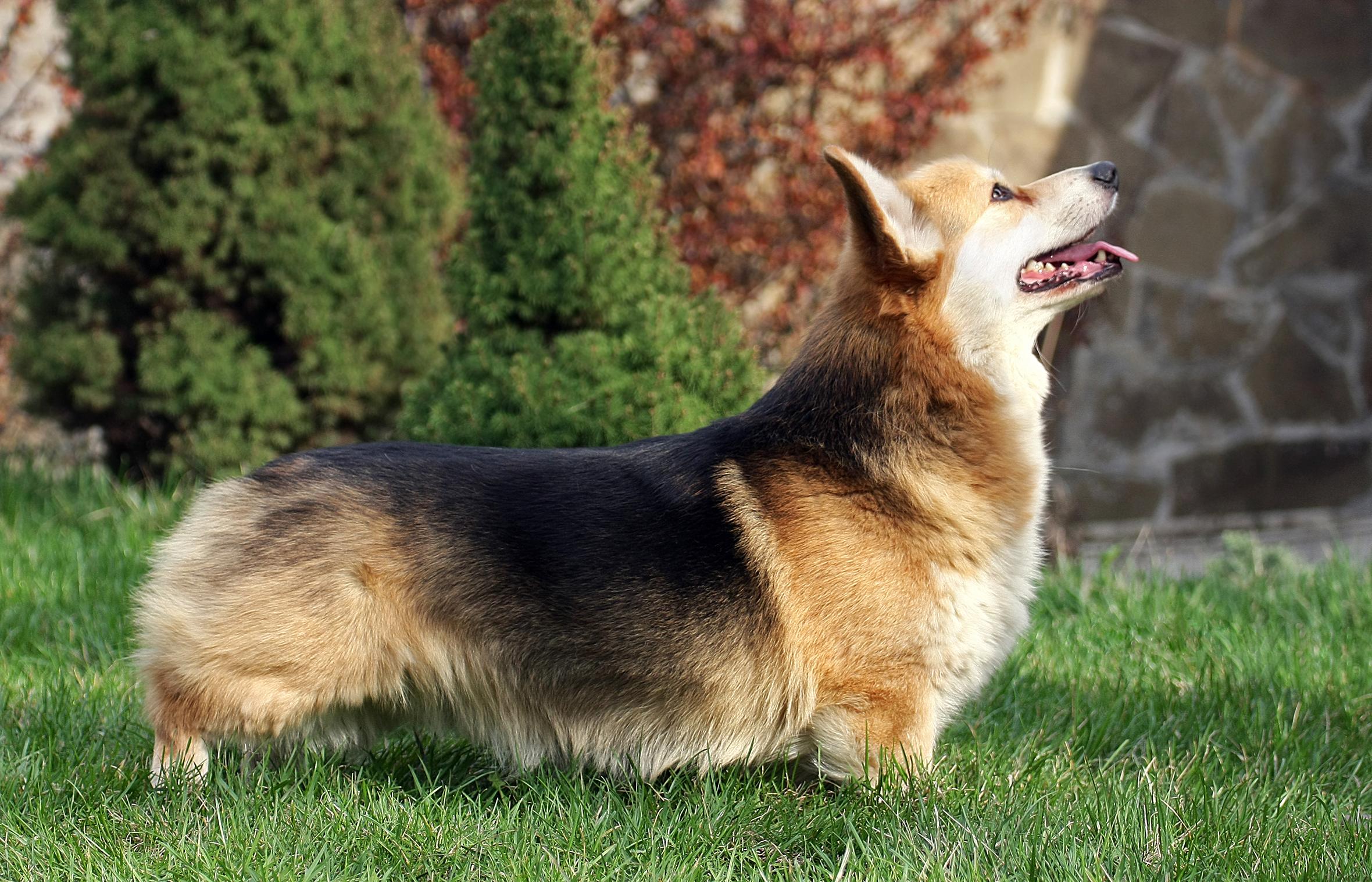 ¿Cómo trata la realeza a sus perros?