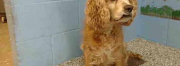 La historia de Cookie, abandonada por un perro más joven