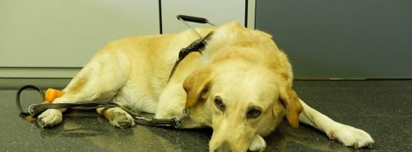 Una mujer ciega es agredida con un bate al entrar con su perro guía en una tienda