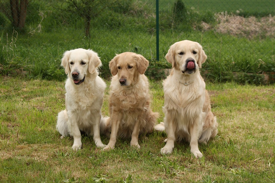 Barcelona, junto con iDogs, crean con programa curativo con perros