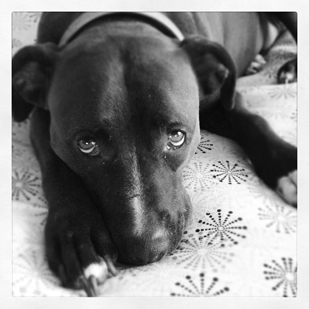 Se realizarán análisis de las heces de los perros