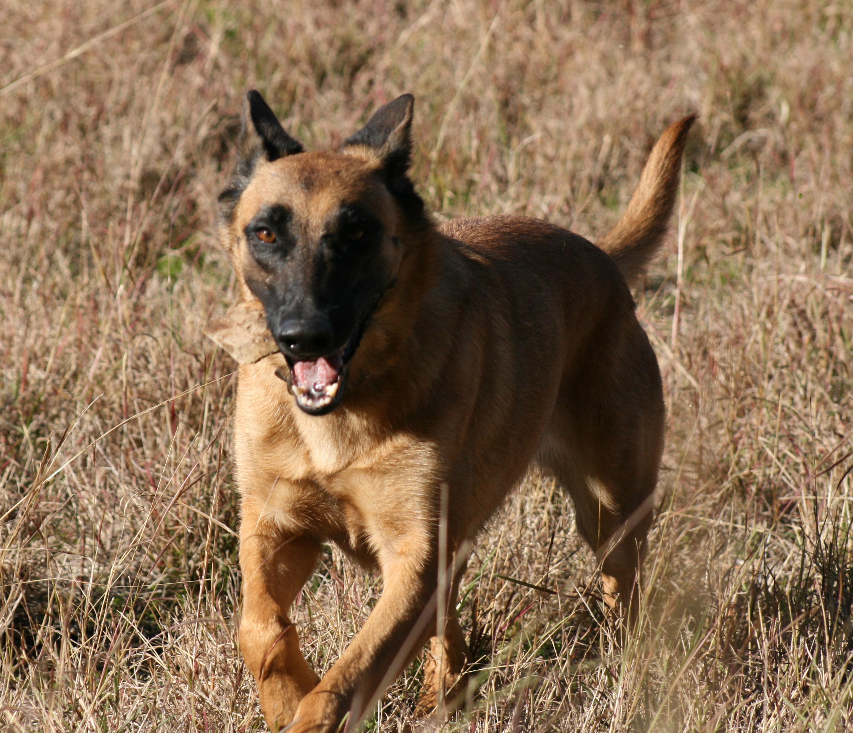 Atila, el perro salvador ha fallecido