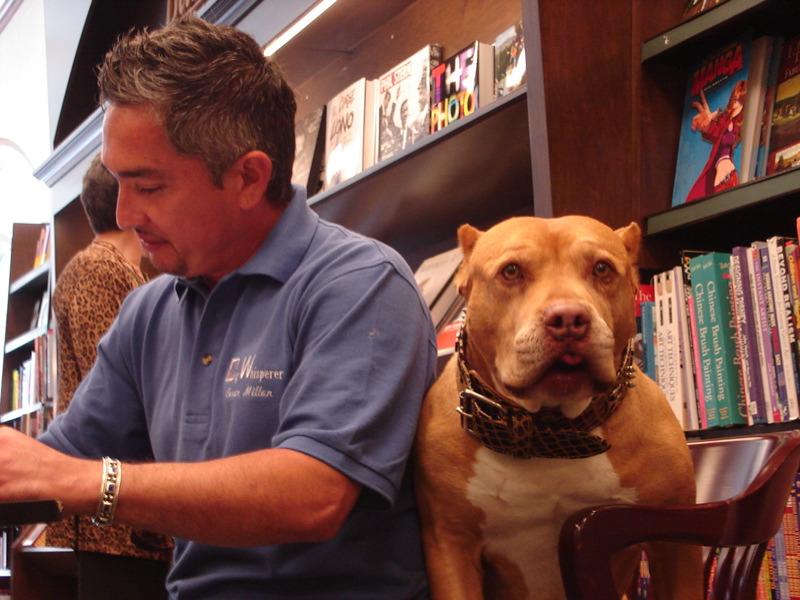 Noticias de perros César Millán a juicio