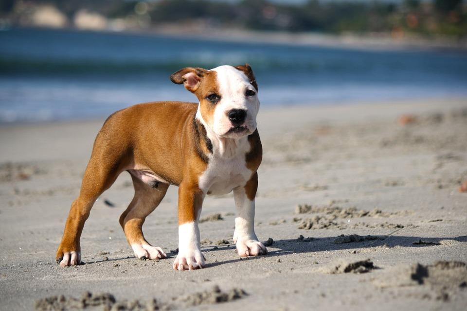 Manifestaciones para defender a los pitbull noticias perros