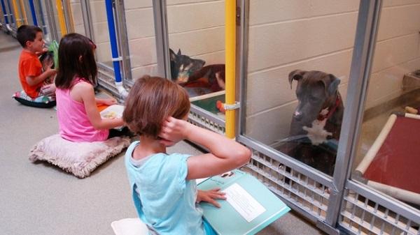 Niños leen cuentos a perros sin hogar
