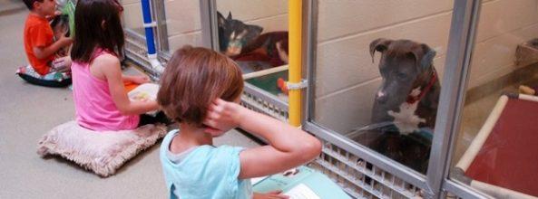 Niños acuden todas las tardes a leerles cuentos a perros sin hogar