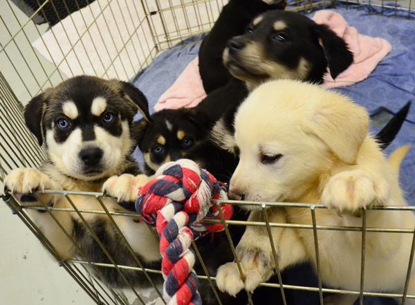 multa venta ilegal de cachorros