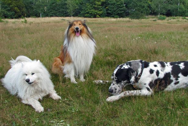 ¿Cómo controlan los perros la hora?