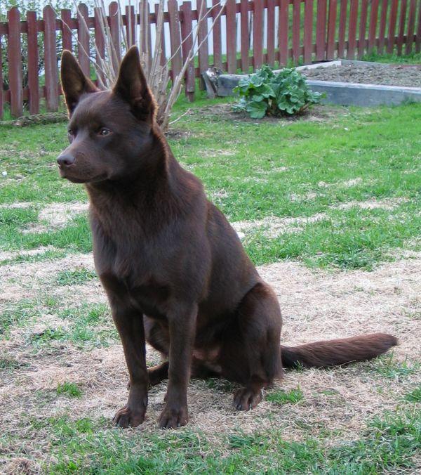El perro más viejo del año tenía 30 años