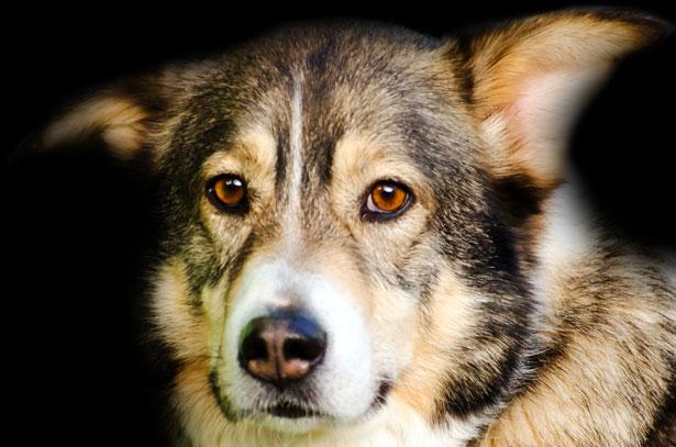 Envenenamientos perros en Grácia