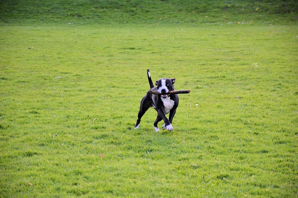 parque de entrenamiento para perros