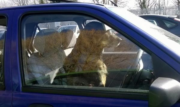 ley permite romper ventanilla