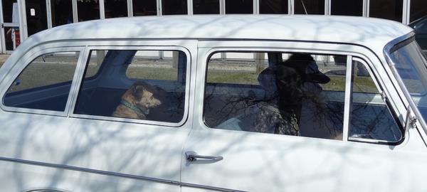 ley salvar mascotas