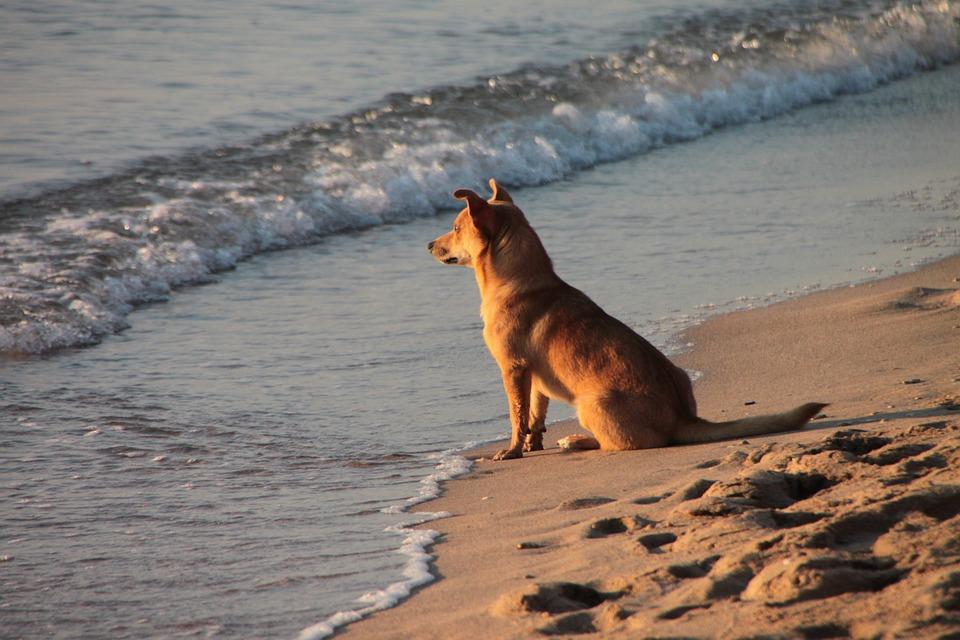 Nueva playa para perros en Santa Pola
