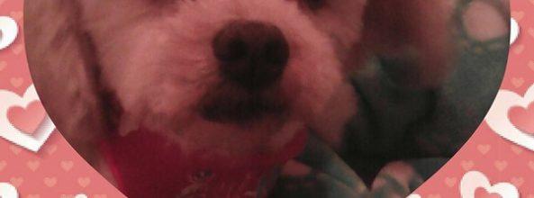 Samara, la perra de Ana