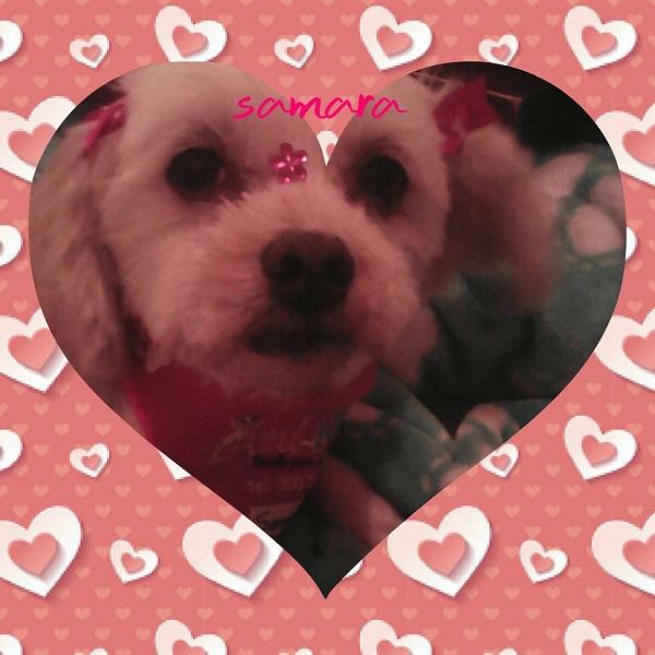 Sarama, la perra de Ana