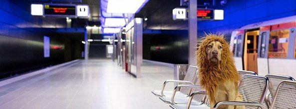 Tschikko, el perro león