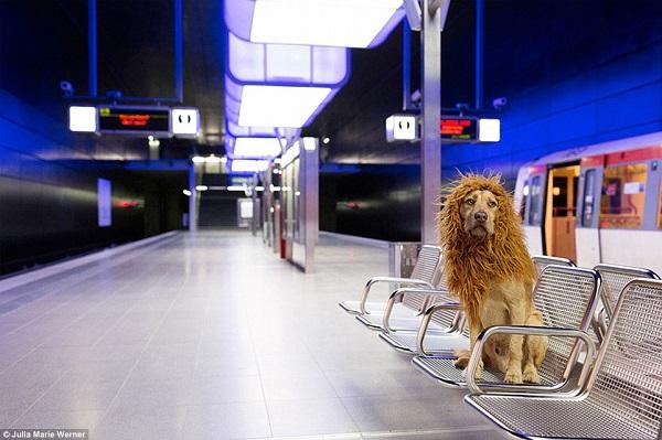 el perro leon