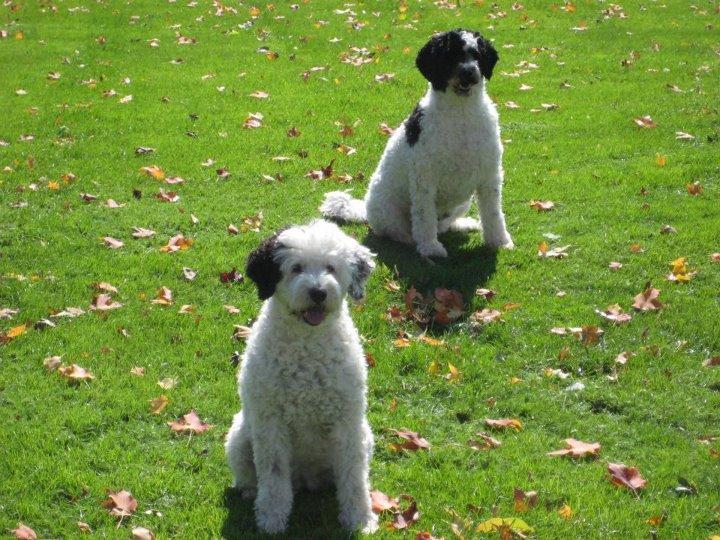 Apps para perros que no deberás dejar escapar