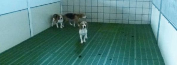Disputa en la Universidad Complutense por el estado de los perros para prácticas veterinarias