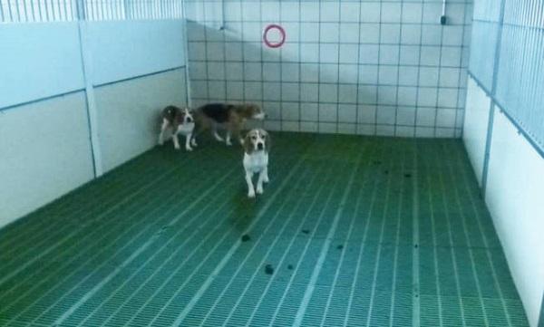 Situación de los perros de prácticas veterinarias en la Complutense